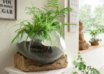Deko-Glas DROP flach 15 cm hoch Teak Wurzel Natur Hellbraun