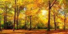 Deko-Panel GRAP 50x100 cm Motiv: Sunny forest von Spiegelprofi