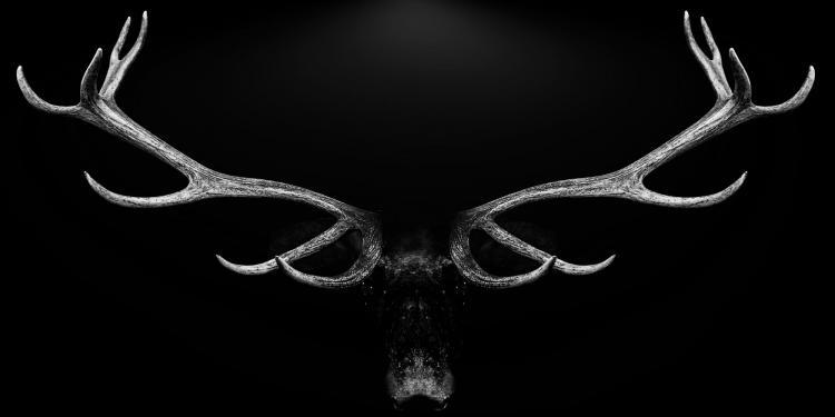 Deko-Panel GRAP 50x100 cm Motiv: Deer antlers von Spiegelprofi